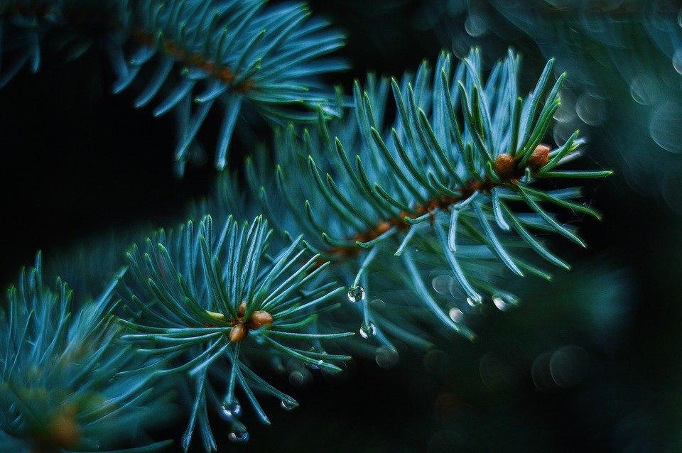 В Бибиреве начали принимать елки на переработку