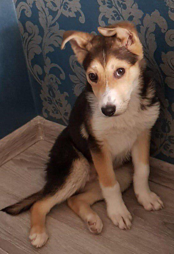 Волонтеры из приюта СВАО ищут хозяев для собаки по кличке Балу