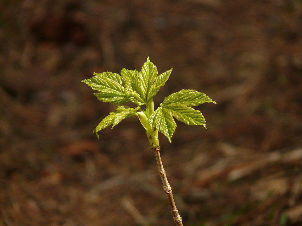 В Бибиреве было высажено 27 новых деревьев