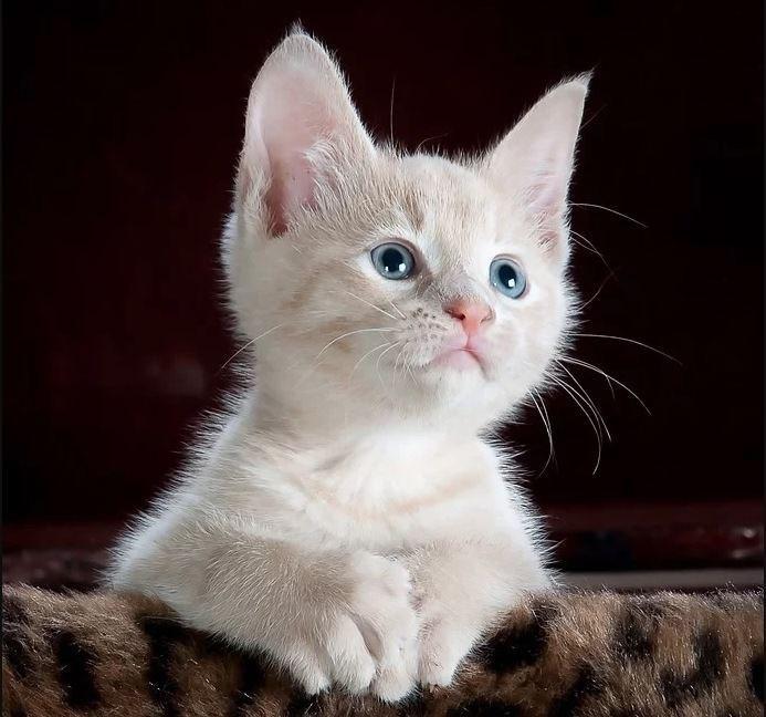 В Бибиреве 11 и 12 января можно будет привить кошек и собак от бешенства