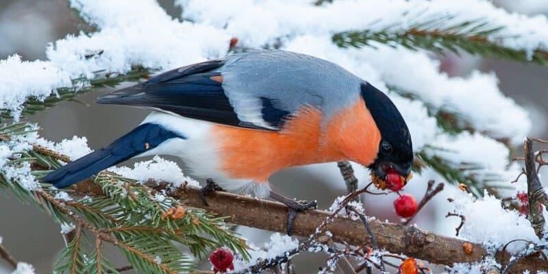 Птицы в Алтуфьевском заказнике сами «расскажут» посетителям, чем их лучше подкармливать